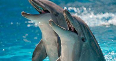 Голоса дельфинов лечат